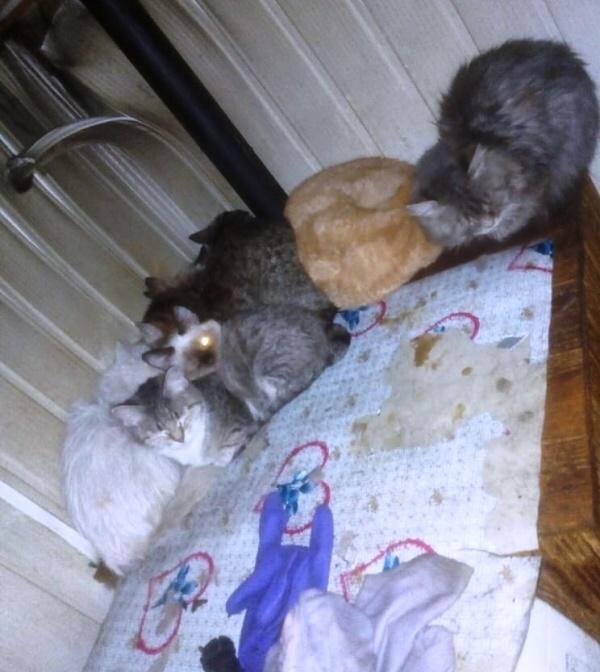 В Твери на пожаре пострадали десятки кошек