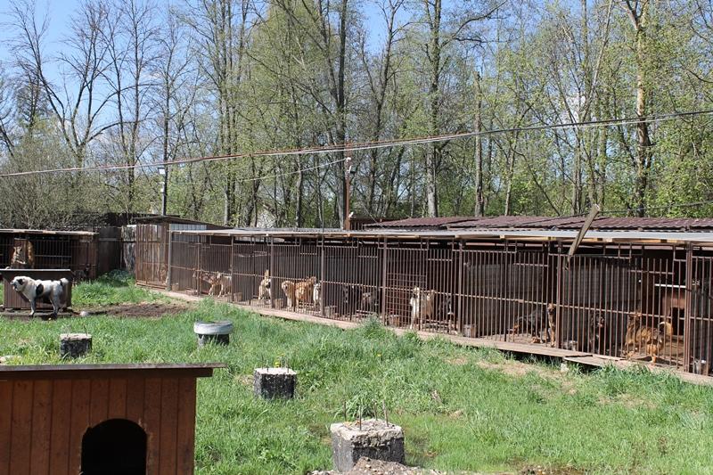 В приют для бездомных животных в Твери привезли 60 кг корма