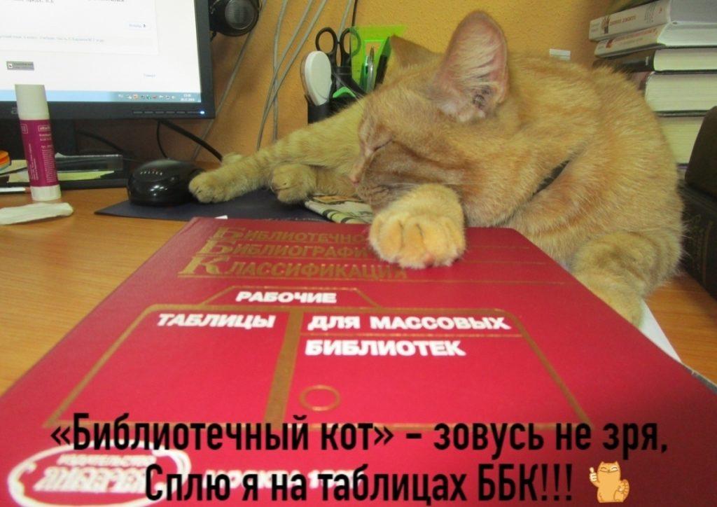 Библиотечный кот Степан из Тверской области надеется на победу в конкурсе «Роман с котом»