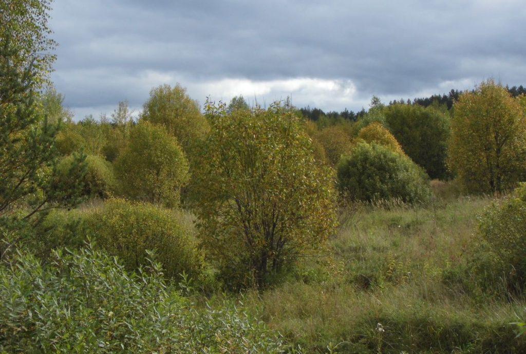 В Тверской области еще 22 га сельхозземель стали лесами