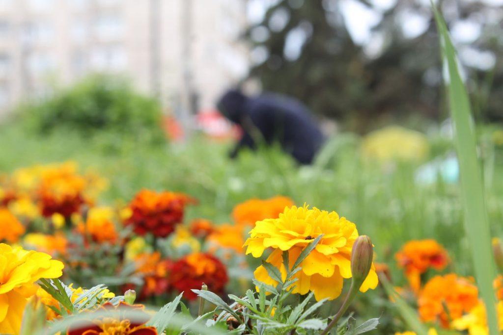 В Твери косят траву и сажают цветы