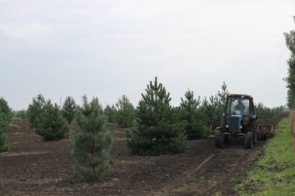 Покупка дополнительной техники для лесовосстановления обойдется Тверской области в 2,1 млн рублей