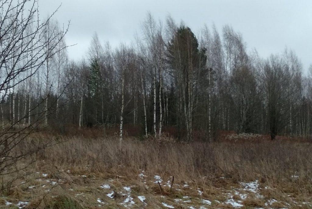 Более чем на 410 га увеличится размер лесного фонда Тверской области