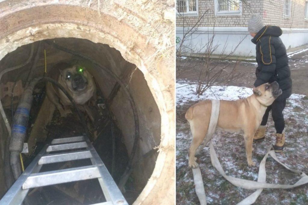 В Тверской области пожарные спасли собаку, провалившуюся в коллектор
