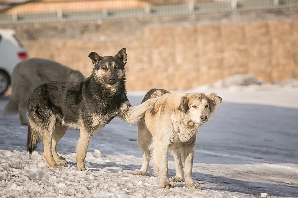 Проблема бездомных собак: убить нельзя спасти