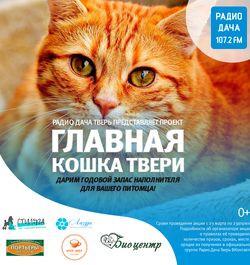 Радио Дача кошки