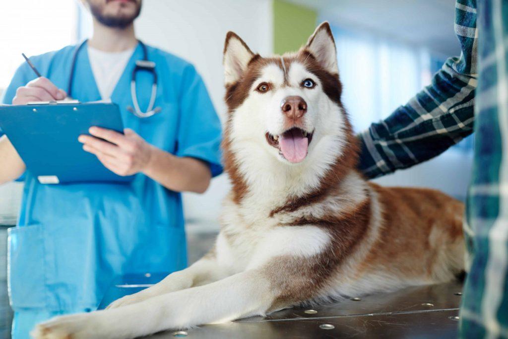 Выбери лучшую ветеринарную клинику в Твери